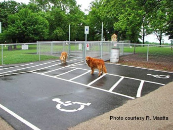 dog_park-newspage-1