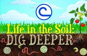 LifeIntheSoil